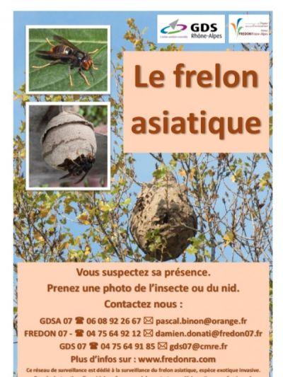 Affiche de signalement du frelon asiatique