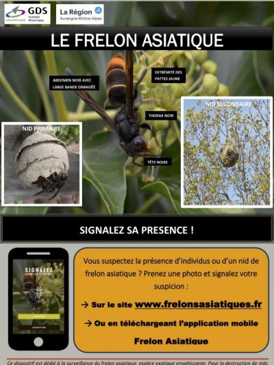 Affiche frelon asiatique