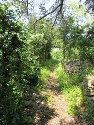 Un sentier dans le vert